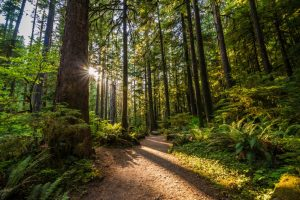 8 Bainbridge Island Parks to Explore