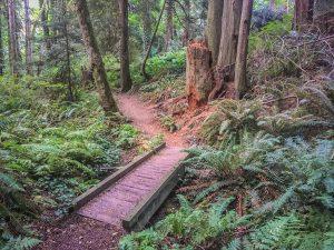 Fairy Dell Trail